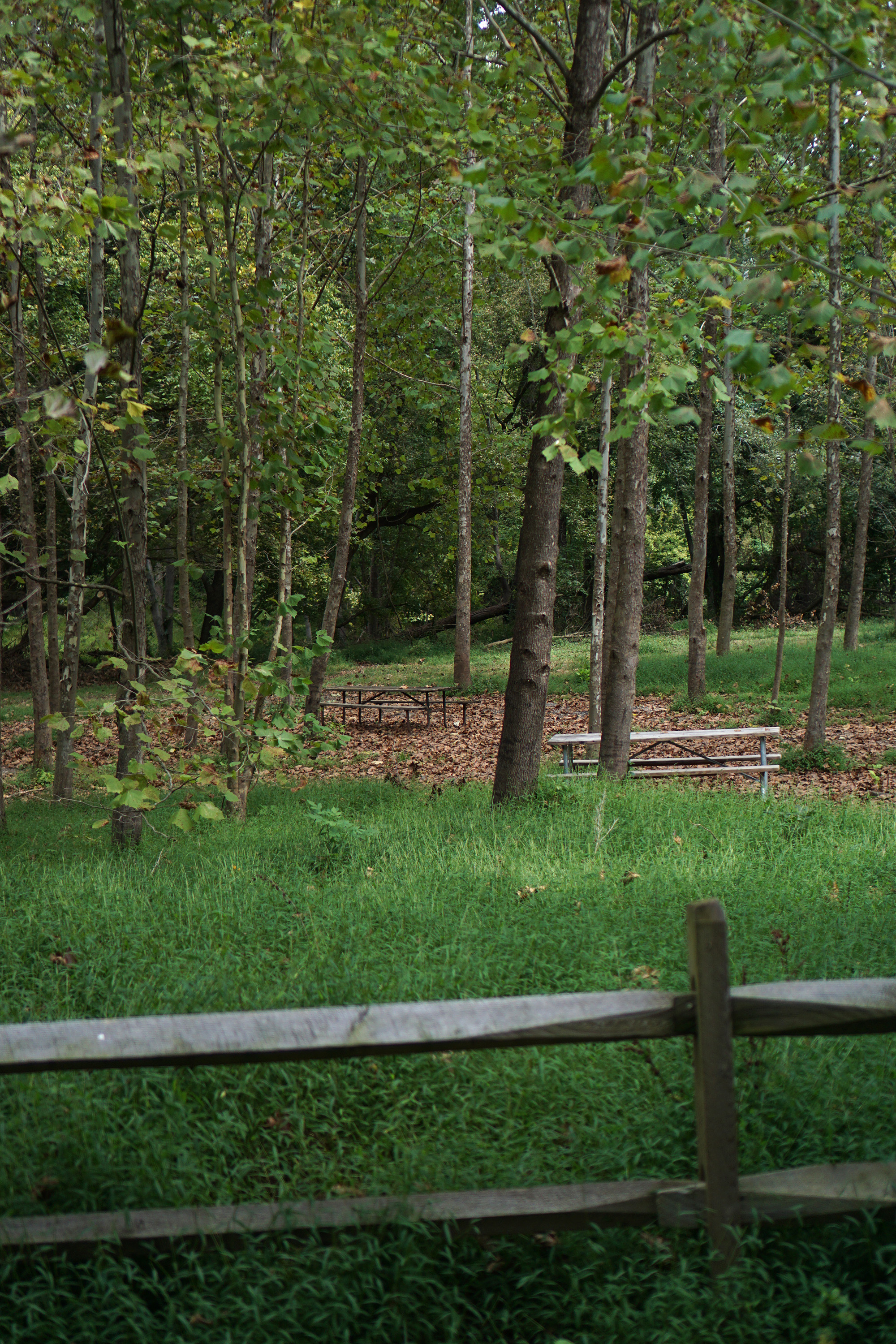 Picnic area among the trees, Patapsco Valley State Park, Maryland / Darker than Green
