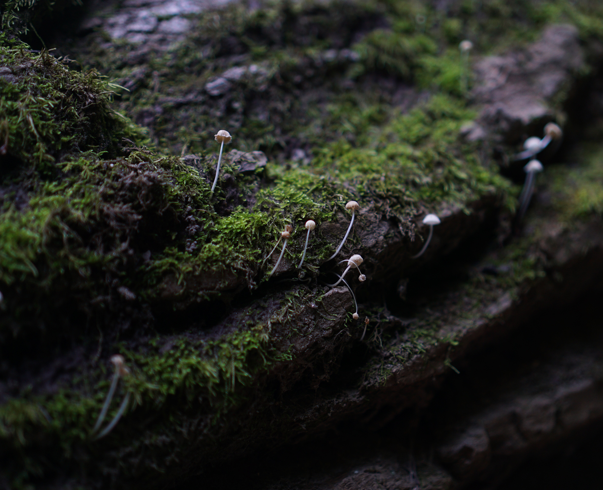 Tiny mushrooms and moss, Patapsco Valley State Park, Maryland / Darker than Green