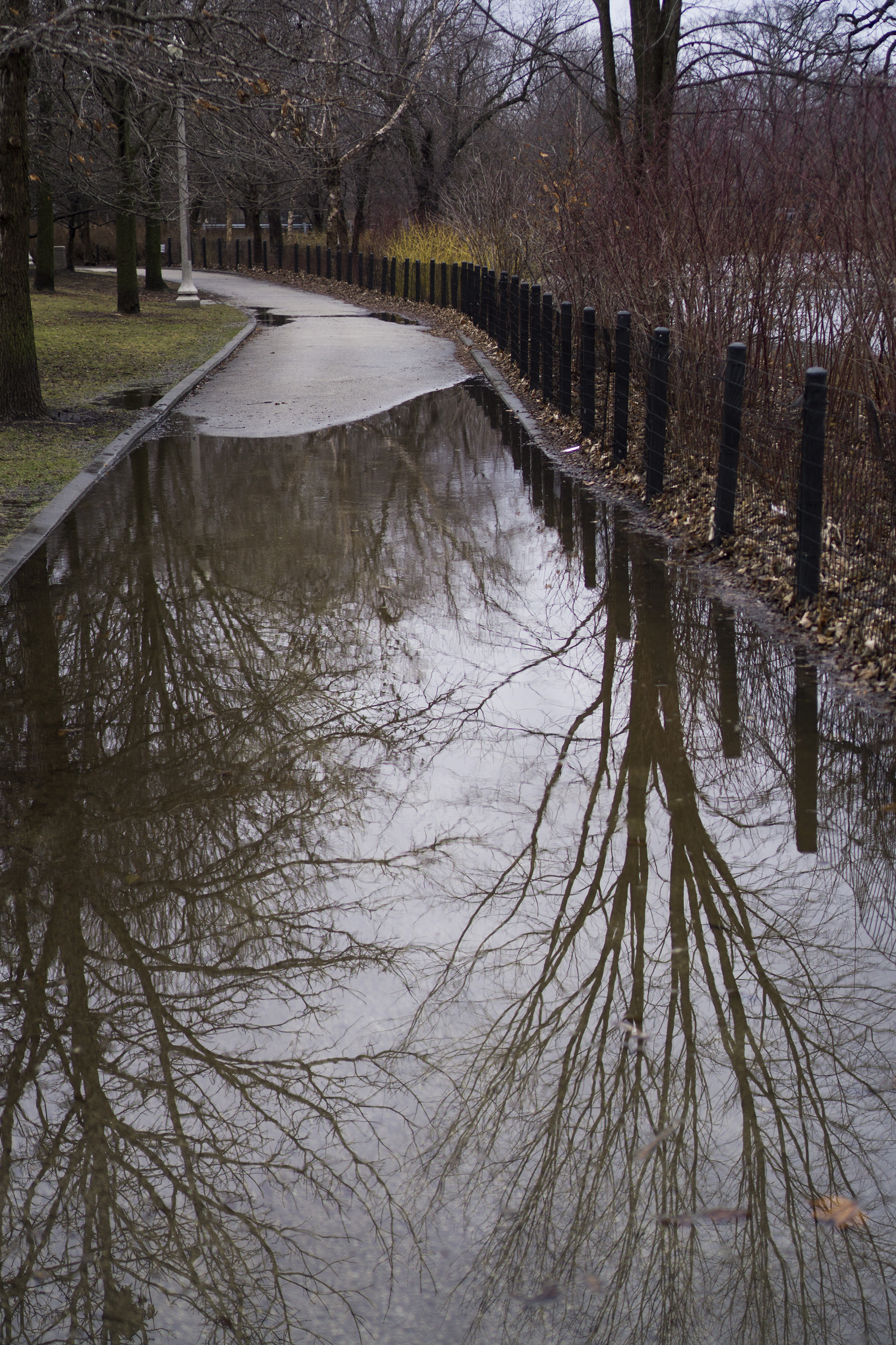 Tree reflections in Gompers Park, Chicago IL / Darker than Green