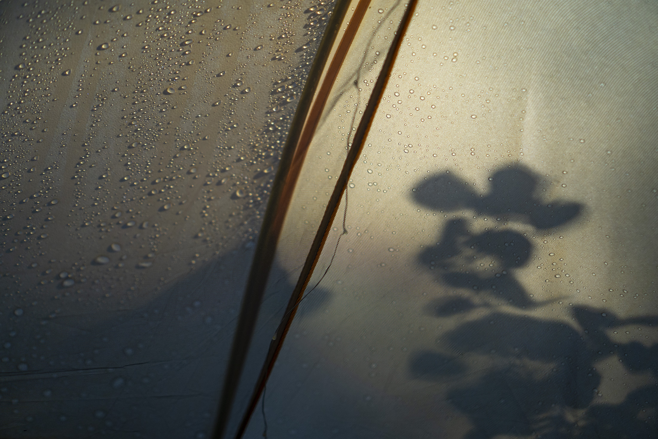 Silhouette of plants in the sunrise light through tent wall, Meeker Park Overflow Campground, Colorado / Darker than Green