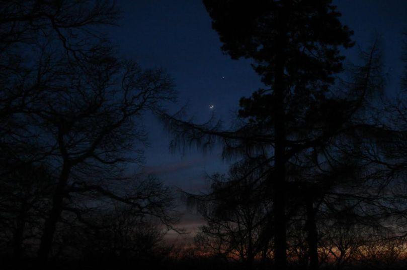 dark-forest-twilight