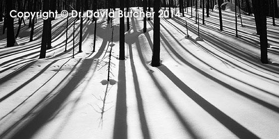 Tree Shadows at Cub Lake, Colorado