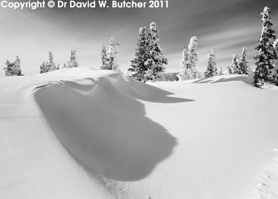 Snow Shapes and Trees, Wolf Creek