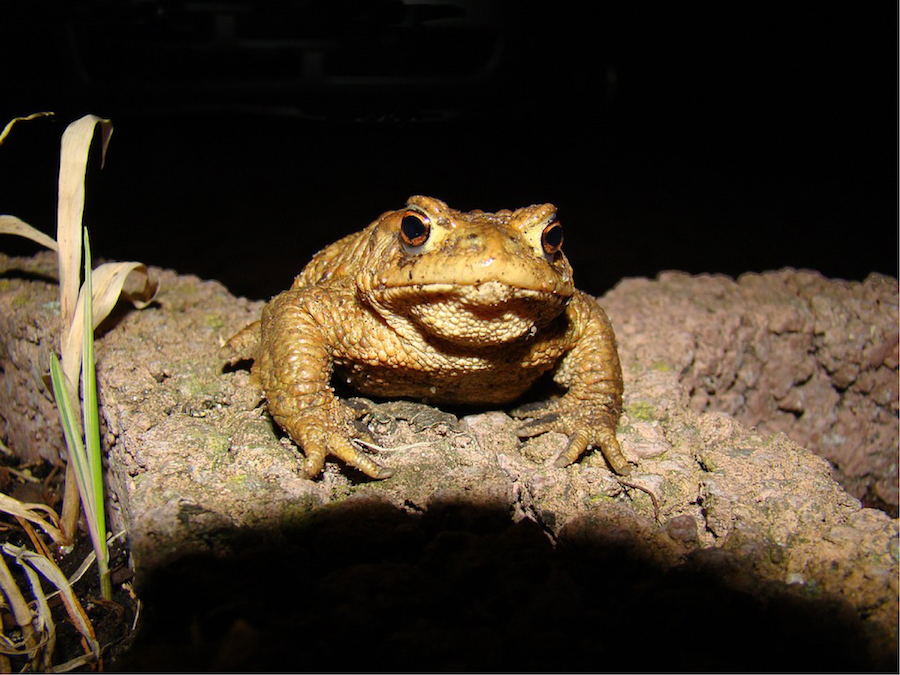 Image result for toad at night