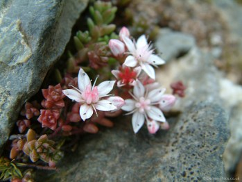 A white flower nestles between rocks