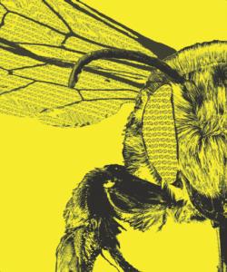 bee medium