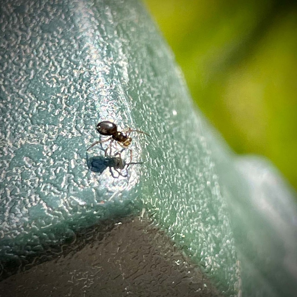 tiny spider on the arm of my chair