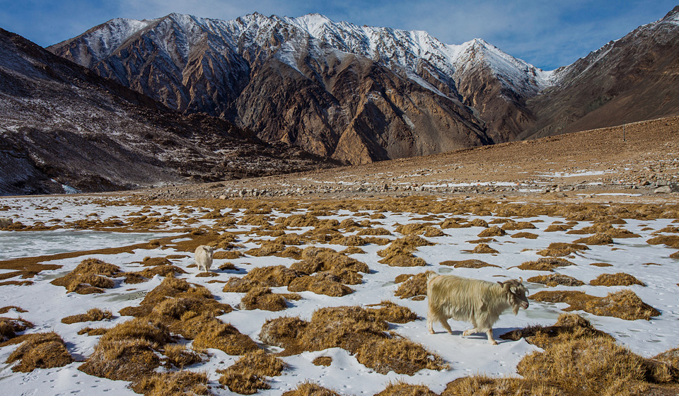winter-ladakh-photography-7
