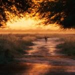 Into a bright future by Shreeram MV