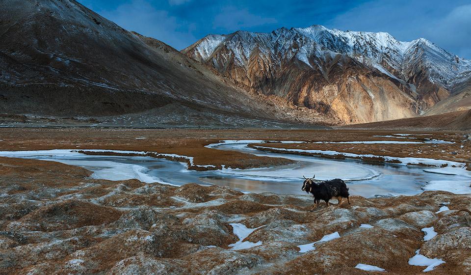 ladakh-winter-122