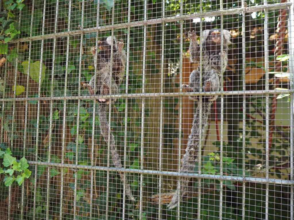 Kobelt-Zoo, Frankfurt, Das vierte Zimmer