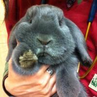 Come diventare un amico perfetto per il coniglio in dieci mosse
