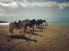 Parchi a cavallo
