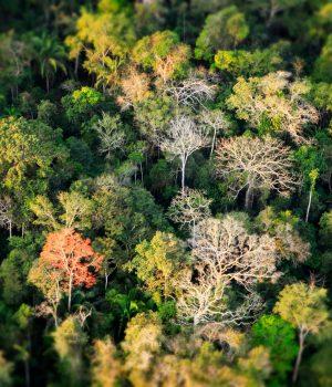 #Together4Forests