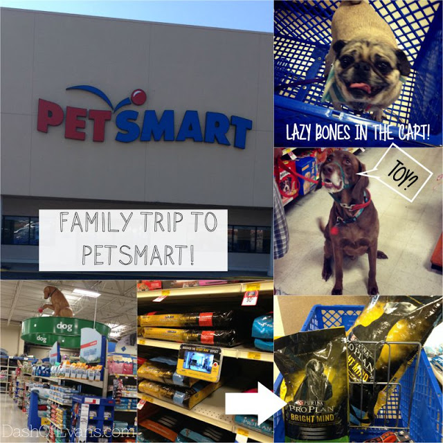 #BrightMind, Pug, Adopting Dogs, Shelter Dogs, Tips for Pet Adoption, PetSmart, Bright Mind Food, Purina