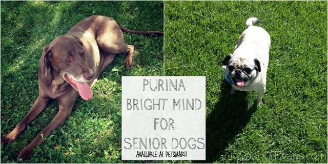 PetSmart, Purina, Bright Mind, Ad, SoFab, Dash of Evans, Pets, Senior Pets
