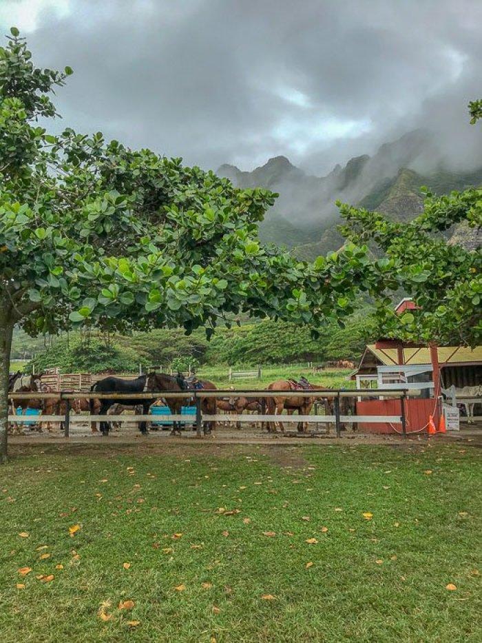 horses at Kualoa Ranch Oahu Hawaii