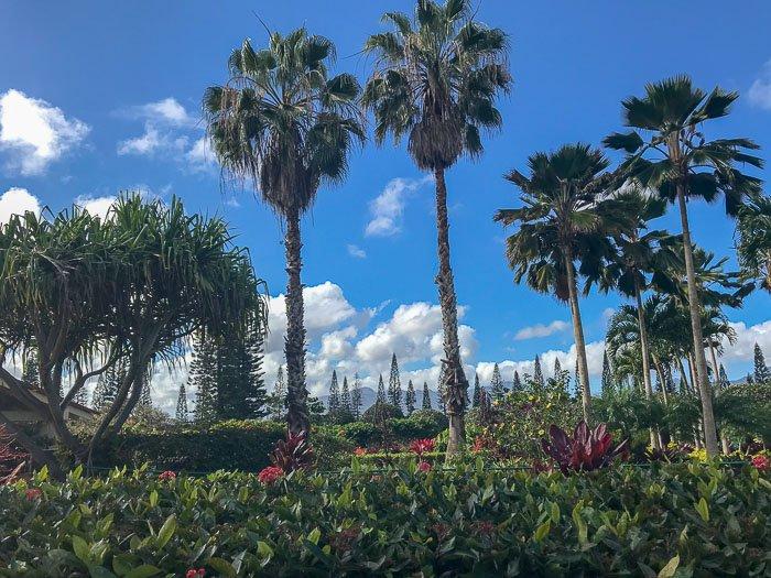 lush grounds at Dole Plantation, Oahu, Hawaii