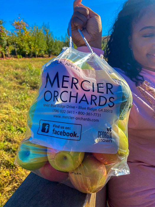 holding bag of freshly-picked apples at Mercier Orchards