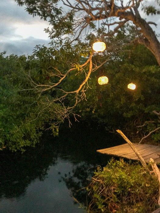 cenote at MangleX Ecohotel Tulum
