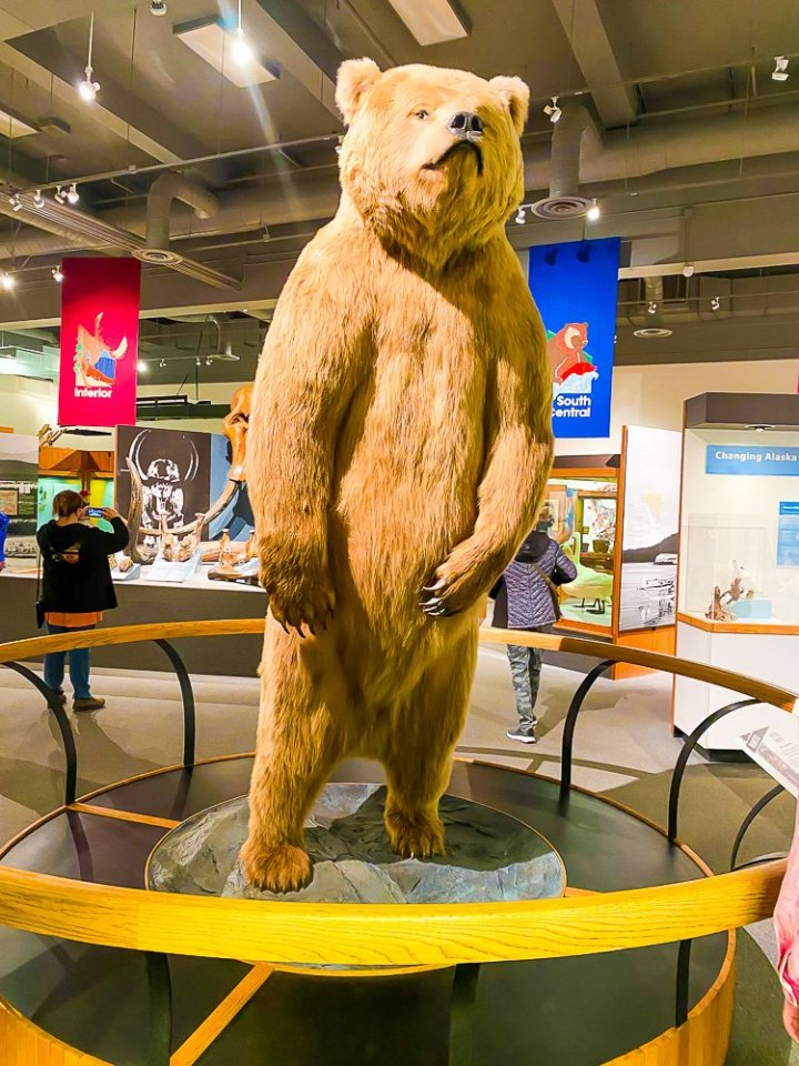 bear statue at Musuem of the North.