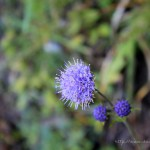 Farchant - Waldlehrpfad Entdeckungen 10