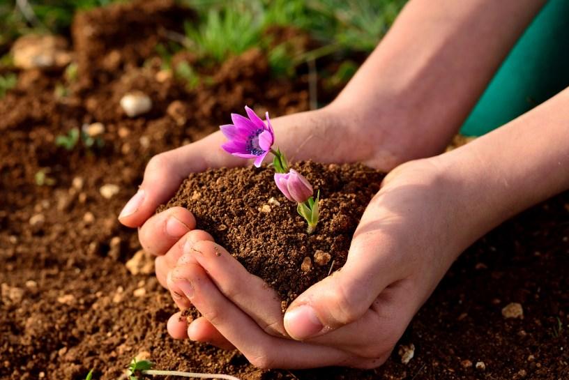 manfaat pupuk kompos bagi tanaman