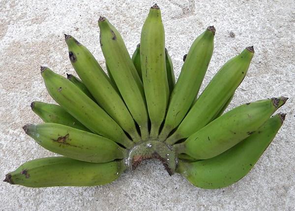 pisang-nangka