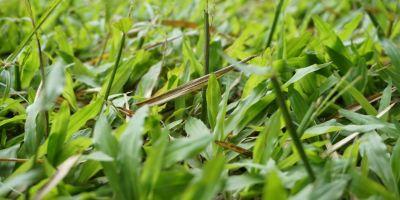 cara membasmi rumput liar