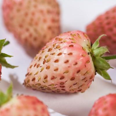 Afbeeldingsresultaat voor bubbleberry aardbei verzorging