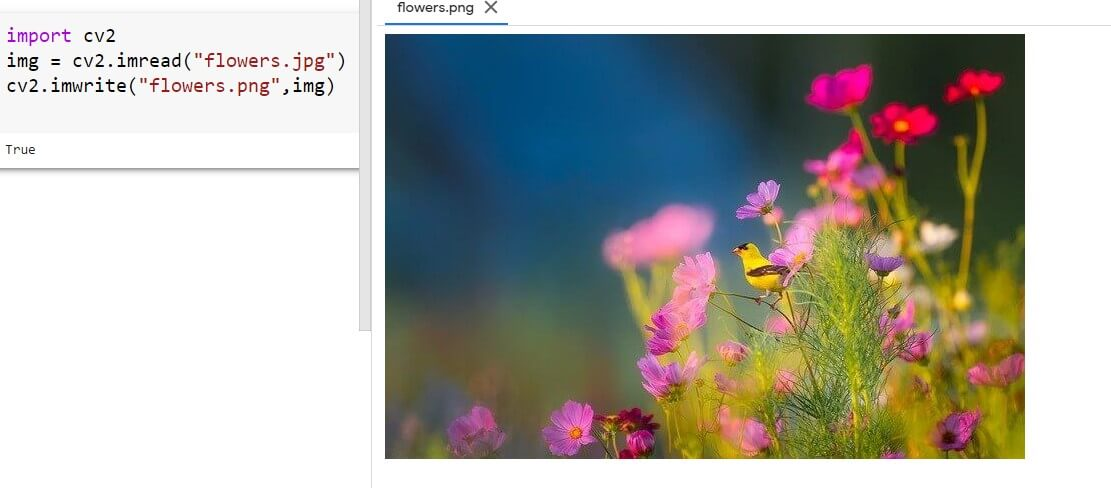 Changing the type of the image file name