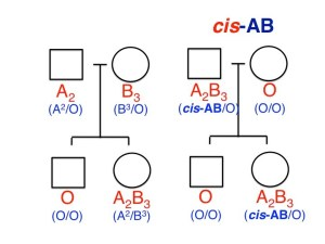 Can a blood type AB/O couple have AB and O children? Cisab