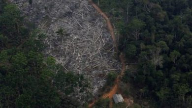 Photo of Brazil's Amazon: Deforestation 'surges to 12-year high'