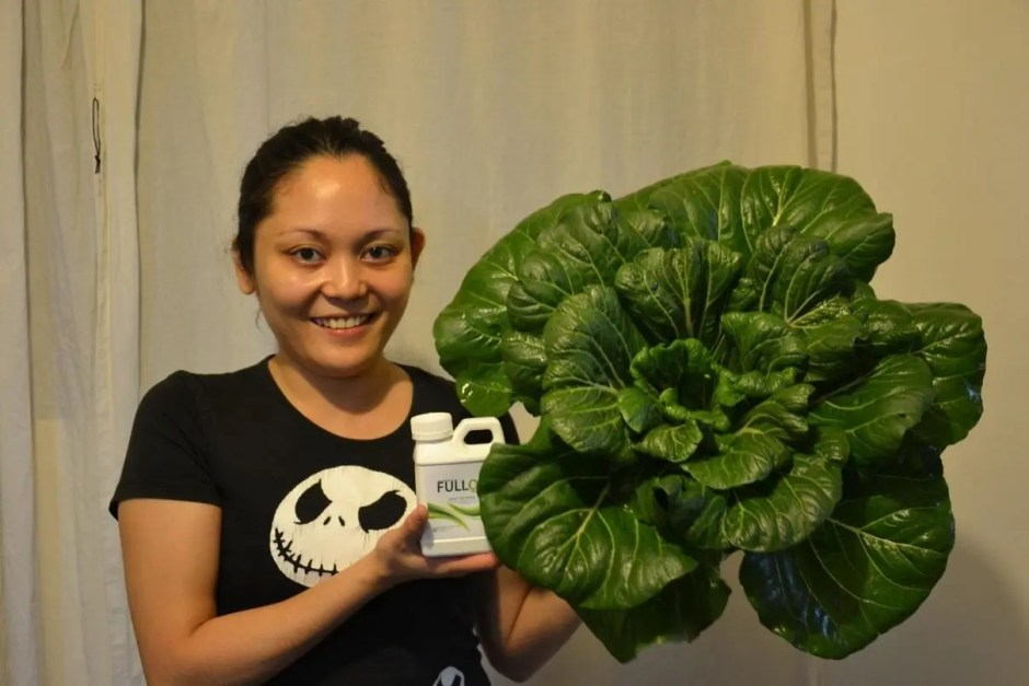 Bok Choy and Full On