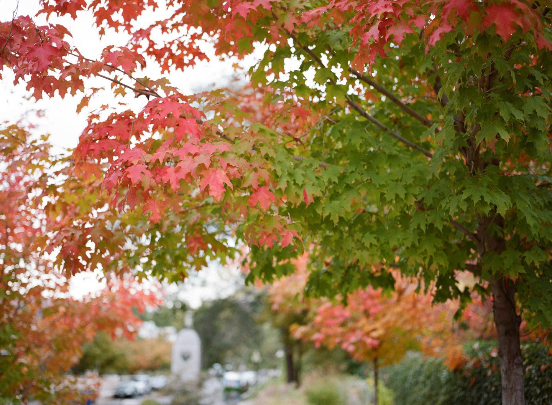 Fall Wedding Locations Near Me