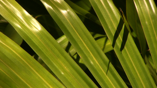 A close-up of plants in Florida.
