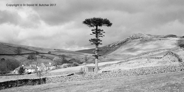 Scafell and Flat-top Tree, Boot, Eskdale, Lake District