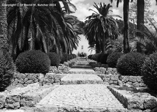 Palm Walk in Alfabia Gardens near Soller, Mallorca, Spain