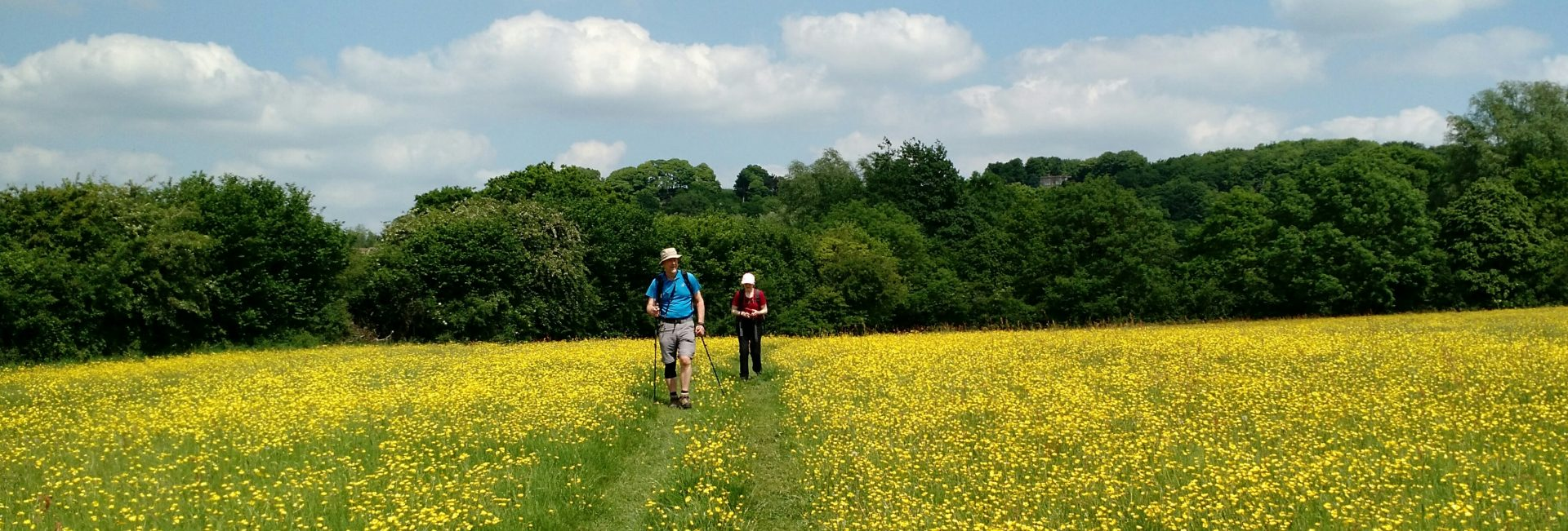 Lots of Buttercups near Sodbury, and Jan and Al, Cotswolds
