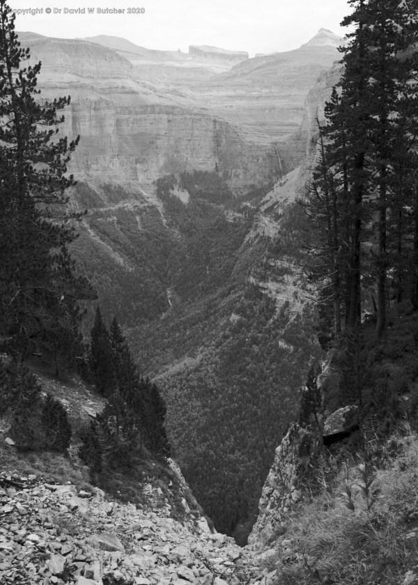 Ordesa Gorge Trees, Torla, Pyrenees
