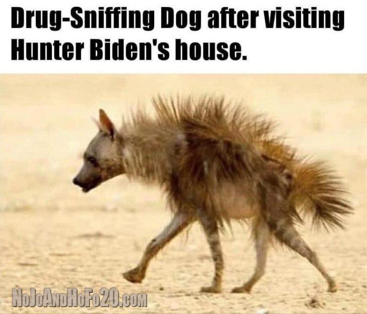 Drug Sniffing Dog - DaveSchultz.com