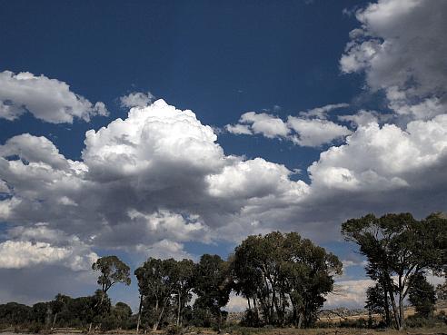 yellowstone cottonwoods