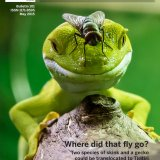 Dawn Chorus magazine cover