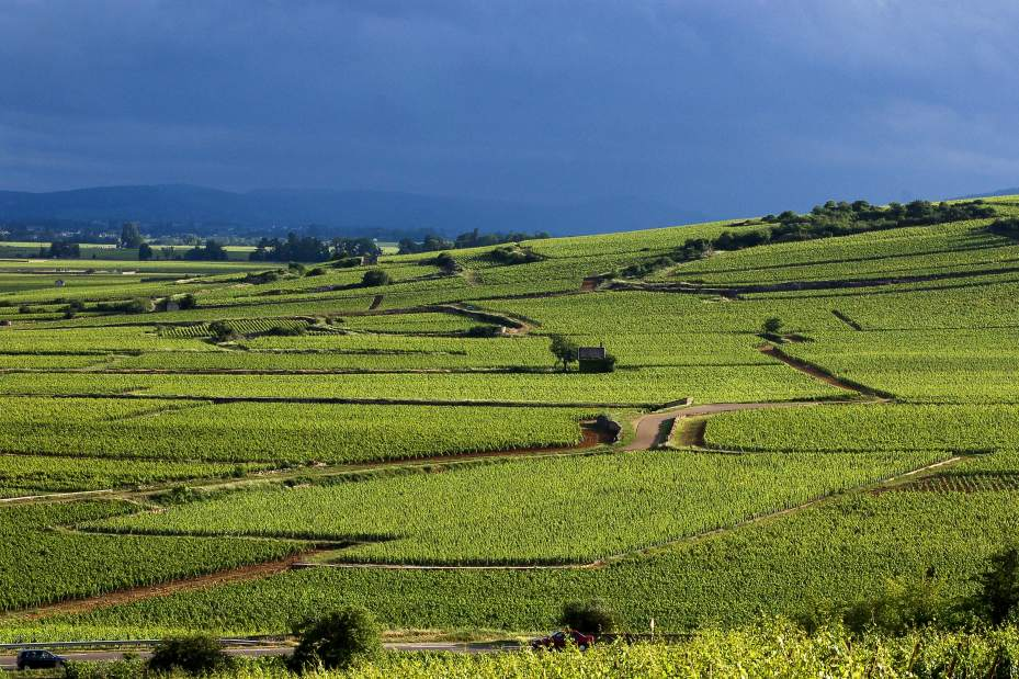 Celebrate 'climats' of Burgundy with distinctive wines