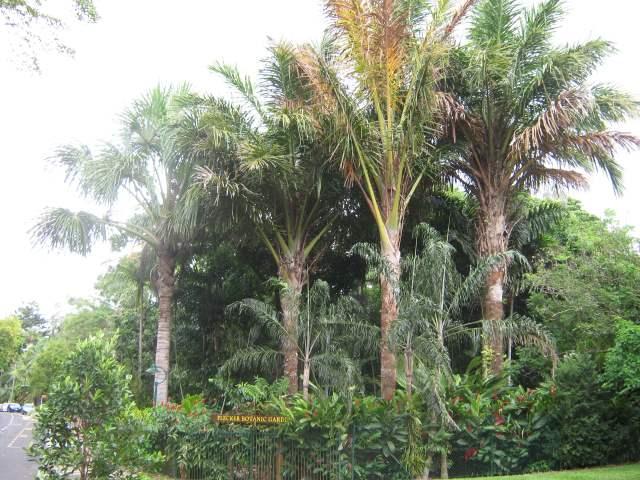 Cairns 2008