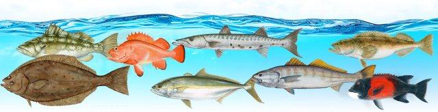 fishslider-spring