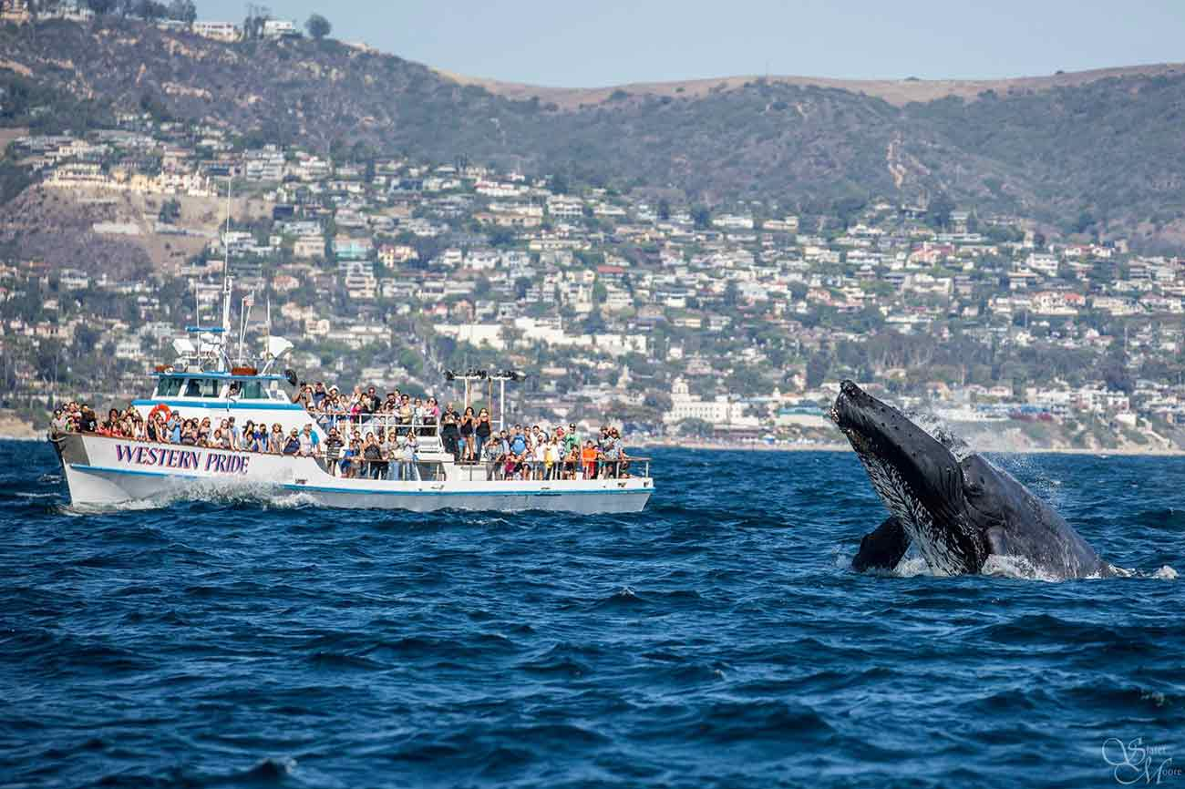 Whale Watching San Diego Visitors 10 Special Daveys Locker