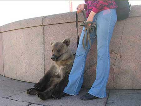 This bear and this hooker go into a bar...