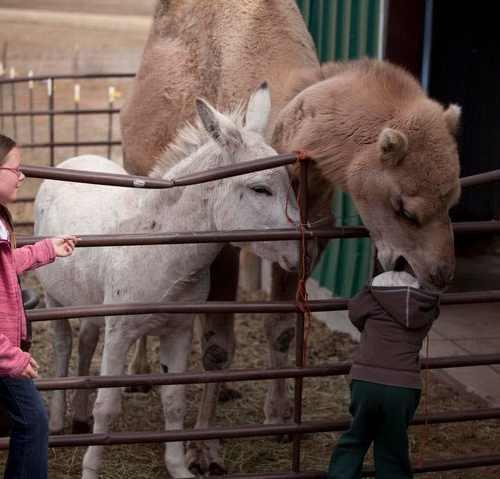 Camel nom nom nom