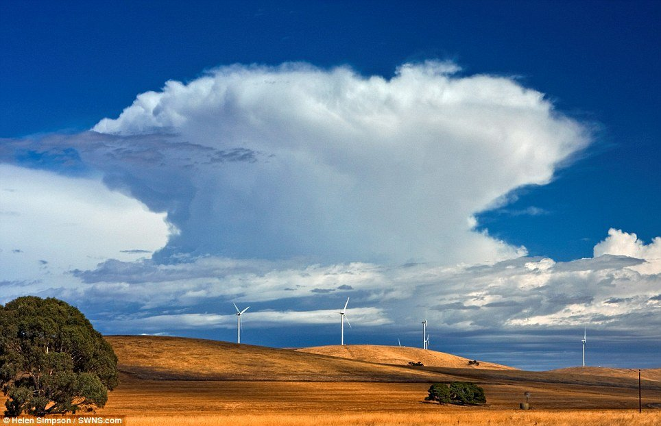 Majesty  and threat - A cumulonimbus with anvil seen beyond wind turbines at Burra,  S.A  by photographer Helen Simpson.